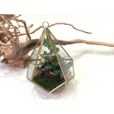 Premium Geometric Terrarium Workshop